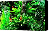 Puerto Rico Photo Canvas Prints - Bromeliads El Yunque National Forest Canvas Print by Thomas R Fletcher