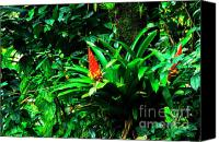 Puerto Rico Photo Canvas Prints - Bromeliads El Yunque  Canvas Print by Thomas R Fletcher
