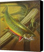 Brook Canvas Prints - Brook Trout Cover Canvas Print by JQ Licensing