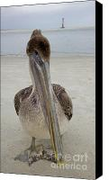 Birds Canvas Prints - Brown Pelican and Lighthouse Canvas Print by Dustin K Ryan