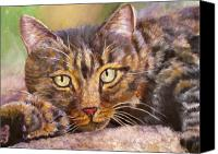 Tabby  Painting Canvas Prints - Brown Tabby Relaxing Canvas Print by Mary Jo  Zorad