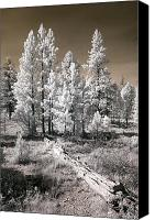 Bryce Canyon Canvas Prints - Bryce Canyon Infrared Trees Canvas Print by Mike Irwin