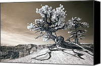 Old Photo Canvas Prints - Bryce Canyon Tree Sculpture Canvas Print by Mike Irwin