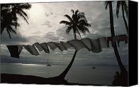 Tropical Photographs Canvas Prints - Buca Bay, Laundry And Palm Trees Canvas Print by James L. Stanfield