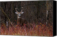 Jim Cumming Canvas Prints - Buck Alert Canvas Print by Jim Cumming