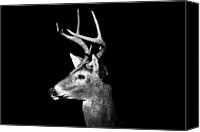 Background Canvas Prints - Buck In Black And White Canvas Print by Malcolm MacGregor