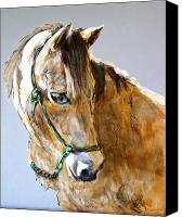 Horse Painting Canvas Prints - Buck of the Morgan Horse Ranch Point Reyes National Seashore Canvas Print by Paul Miller