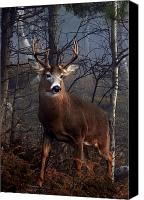 Jim Cumming Canvas Prints - Buck on Ridge Canvas Print by Jim Cumming