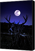 Whitetail Buck Canvas Prints - Buck The Moon Canvas Print by Emily Stauring
