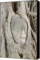 Asia Reliefs Canvas Prints - Buddha Head in a Tree Canvas Print by Kanoksak Detboon
