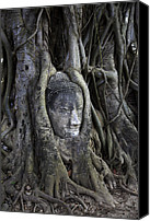 Face Digital Art Canvas Prints - Buddha Head in Tree Canvas Print by Adrian Evans