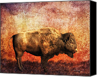 Bison Canvas Prints - Buffalo Canvas Print by Bob Orsillo