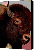 Bison Canvas Prints - Buffalo Bull Canvas Print by Jan Amiss Photography