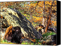 Bison Canvas Prints - Buffalo In Camo Canvas Print by Robert Frederick