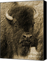 Bison Canvas Prints - Buffalo Canvas Print by Robert Frederick