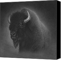 Buffalo Drawings Canvas Prints - Buffalo Canvas Print by Tim Dangaran