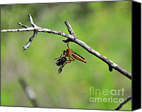 Insect Photography Canvas Prints - Bug Eat Bug Canvas Print by Al Powell Photography USA