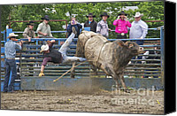 Bulls Photo Canvas Prints - Bull 1 - Rider 0 Canvas Print by Sean Griffin