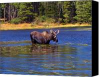 Bull Moose Canvas Prints - Bull Moose In The Mountains Canvas Print by Terril Heilman