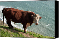Mendocino Coast Canvas Prints - Bull on the Edge Canvas Print by Lorraine Devon Wilke