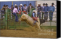 Bulls Photo Canvas Prints - Bull Rider 2 Canvas Print by Sean Griffin