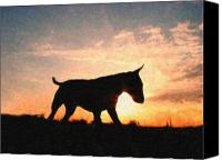 Terrier Canvas Prints - Bull Terrier at Sunset Canvas Print by Michael Tompsett