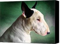 Animal Portrait Canvas Prints - Bull Terrier on Green Canvas Print by Michael Tompsett