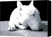 Terrier Canvas Prints - Bull Terrier White on Black Canvas Print by Michael Tompsett