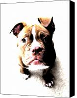 Puppy Canvas Prints - Bulldog Puppy Canvas Print by Michael Tompsett