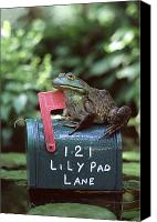 Bullfrogs Canvas Prints - Bullfrog Canvas Print by Kenneth H Thomas and Photo Researchers