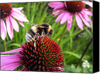 Wild-flower Pastels Canvas Prints - Bumble Bee Canvas Print by Eamon Gilbert