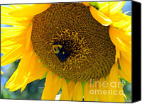 Bumblebees Canvas Prints - Bumble Rumble Canvas Print by Karen Wiles