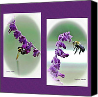 Bumblebees Canvas Prints - Bumbling About Canvas Print by DigiArt Diaries by Vicky Browning