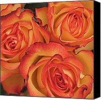 Orange Flower Photo Canvas Prints - Bunch Of Orange Roses Canvas Print by Kim Haddon Photography