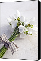 Winter Wedding Flowers Canvas Prints - Bunch Of Snowdrops (galanthus Nivalis) With Purple Ribbon Canvas Print by Juliette Wade