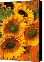 Sunflowers Canvas Prints - Bunch of sunflowers Canvas Print by Garry Gay