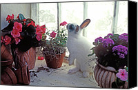 Easter Rabbit Photo Canvas Prints - Bunny in window Canvas Print by Garry Gay