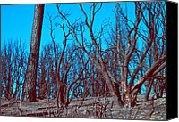 Burned Canvas Prints - Burned Trees and the sky Canvas Print by Irina  March