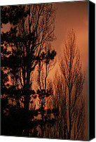 Burning Tree Canvas Prints - Burnt Skies Canvas Print by Alex King