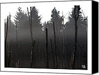 Dan Daulby Canvas Prints - Burnt Trees in Fog Canvas Print by Dan Daulby