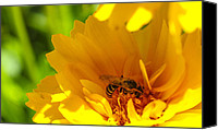 "\""macro Photography\\\"" Canvas Prints - Busy Bee  Canvas Print by Scott McGuire"