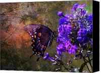 Walker Digital Art Canvas Prints - Busy Spicebush Butterfly Canvas Print by J Larry Walker