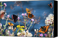 Insect Photography Canvas Prints - Butterflies Sitting On Flower Canvas Print by www.WM ArtPhoto.se