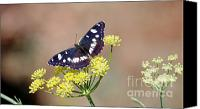 Insects Pyrography Canvas Prints - Butterfly Canvas Print by Barbara Carretta