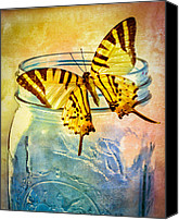 Glass Photo Canvas Prints - Butterfly Blue Glass Jar Canvas Print by Bob Orsillo