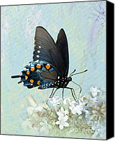 Pipevine Swallowtail Butterfly Digital Art Canvas Prints - Butterfly Candy Canvas Print by Betty LaRue