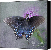 Pipevine Swallowtail Butterfly Digital Art Canvas Prints - Butterfly Dance Canvas Print by Betty LaRue
