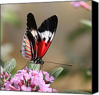 Red Flowers Pyrography Canvas Prints - Butterfly Elegance Canvas Print by Valia Bradshaw