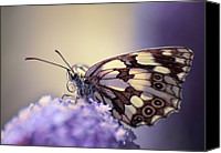 Natural Pattern Photo Canvas Prints - Butterfly Canvas Print by MariClick Photography