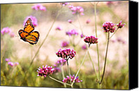 Floral Giclee Canvas Prints - Butterfly - Monarach - The sweet life Canvas Print by Mike Savad